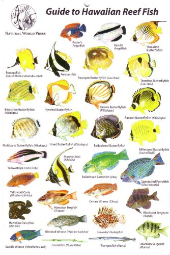 Guide to hawaiian reef fish for Hawaiian reef fish