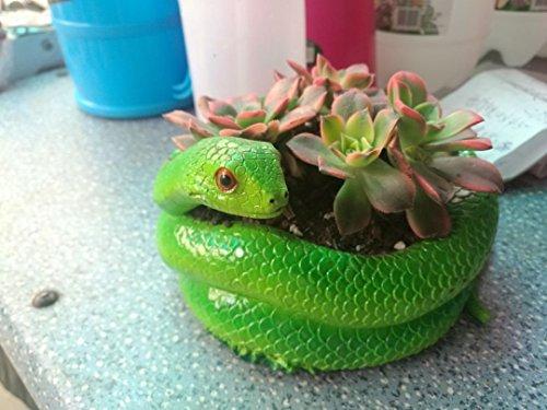 (Pastoral style indoor desktop resin flower pot/planter, Snake shape crafts creative fleshy serpentine plants (Serpentine) )