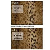 Lana Fur Cleaning Kit