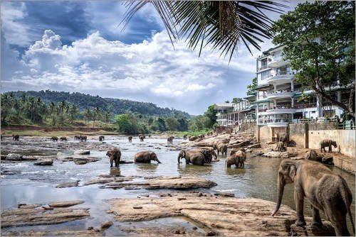 Pinnawala elephant orphanage in Sri Lanka Sri+Lanka