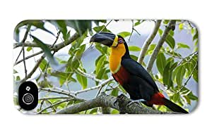 Hipster iPhone 4 case fancy colorful toucan bird PC 3D for Apple iPhone 4/4S
