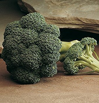 David's Garden Seeds Broccoli Arcadia D139 (Green) 50 Hybrid Seeds
