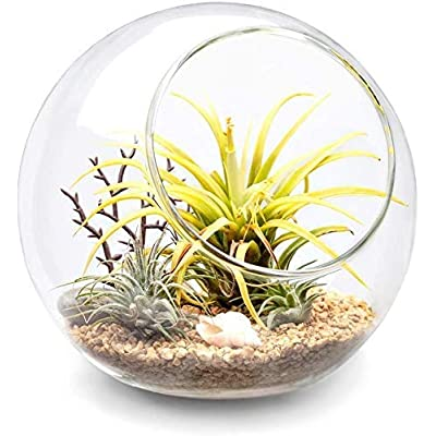 Mkono Plant Terrarium Display Glass Tabletop Succulent Air Plant Planter Globe Microlandschaft House, M: Garden & Outdoor