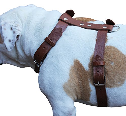 """Brown Genuine Tooled Leather Dog Harness Large. 27""""-37"""" Chest, 1.25"""" Wide Straps Pitbull, Boxer"""