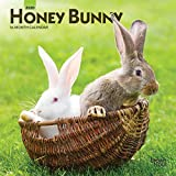 Honey Bunny 2020 7 x 7 Inch Monthly Mini Wall Calendar, Domestic Small Cute Animals (English, Spanish and French Edition)