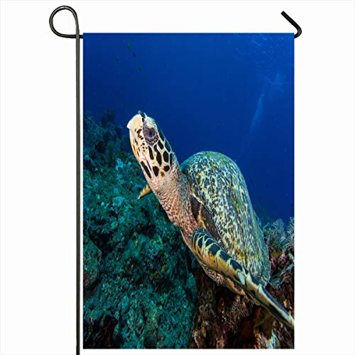 (Ahawoso Seasonal Garden Flag 12x18 Inches Diver Blue Caribbean Scuba Diving Indonesia Hawksbill Bali Turtle Beach Sports Recreation Green Home Decorative Outdoor Double Sided House Yard Sign)