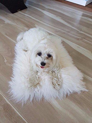 100 Genuine Sheepskin Pet Bed Rug Seat Cover Pet Dog