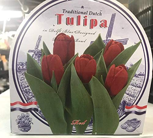 Red Tulip Indoor Growing Kit with Delft Ceramic Bowl, Grow Your own Tulips
