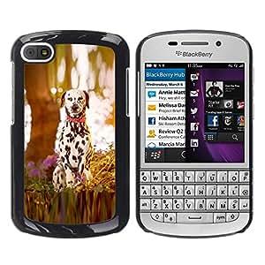 Caucho caso de Shell duro de la cubierta de accesorios de protección BY RAYDREAMMM - BlackBerry Q10 - dalmatian puppy dog wood