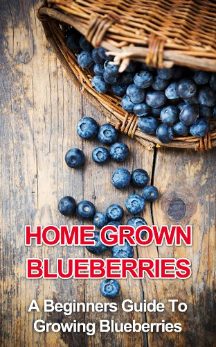Home Grown Blueberries: A Beginners Guide To Growing Blueberries (beginners gardening, home grown berries, backyard berries, garden design, urban farming, organic fruit, growing ()