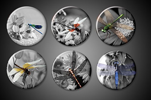 Dragon Fly Magnets Set nature black and white decorative Dragonfly magnets for fridge, pendants, magnet boards 1 inch