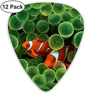 Pez payaso Peces tropicales Nemo 351 Forma de guitarra de ...