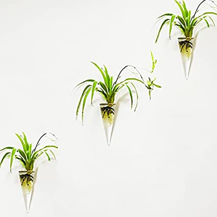 Amazon Mkono 2 Pack Wall Hanging Vase Glass Flower Plant