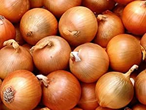 Seeds Onions Skvirsky Organic Russian Heirloom Vegetable Seed