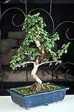 9GreenBox - 10 Ceramic Vase Imported Flowering Fukien - Best Reviews Guide
