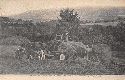 Mohawk Valley New York Harvest Scene Ox Cart Antique Postcard J77669