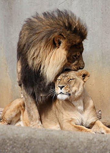 1art1 Grands Félins Poster Papier Peint Autocollant - Lion Et Lionne, Amour  Félin, 2 Parties (250 x 180 cm): Amazon.fr: Cuisine & Maison