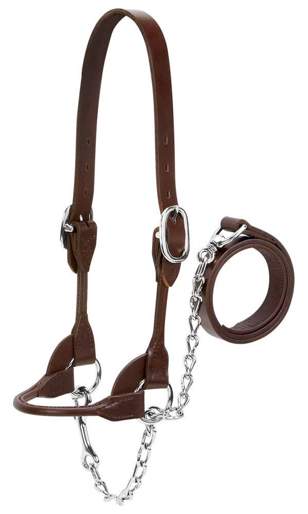 Weaver Leather Livestock Dairy/Beef Rounded Show Halter