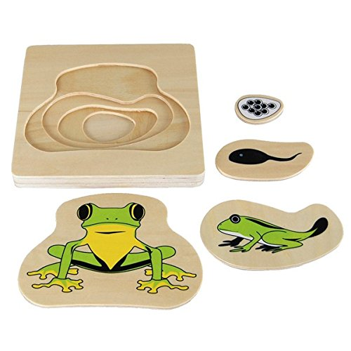 Montessori Frog Life-Cycle Puzzle