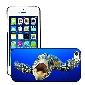 Print Motif Coque de protection Case Cover // V00002096 Sea Turtle // Apple iPhone 5 5S 5G
