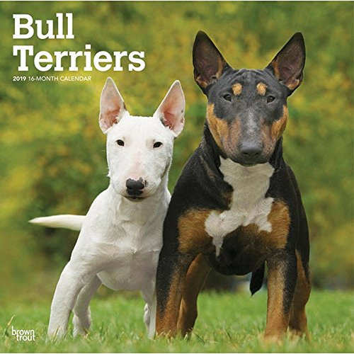 2019 Bull Terriers Wall Calendar, Bull Terrier by BrownTrout ()