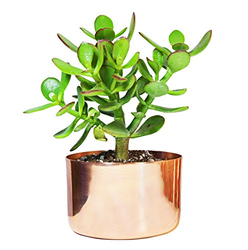 4 Copper Succulent Planter - Perfect for All Plants - by Alchemade