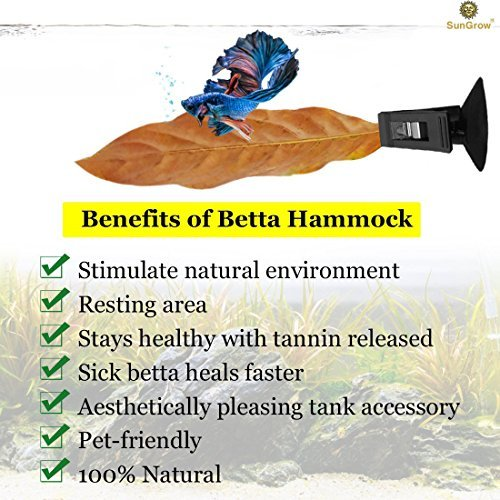 SunGrow Betta Bed Kit (6 Beds + 2 Suction Cups) Non-Plastic, BPA-Free Hammock - Natural, Organic, Comfortable Rest Area for Fish Aquarium - Improves Health by Simulating Betta's Natural Habitat