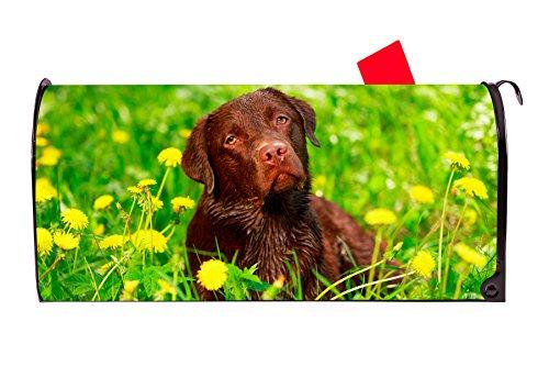 Chocolate Labrador Magnetic Mailbox Cover