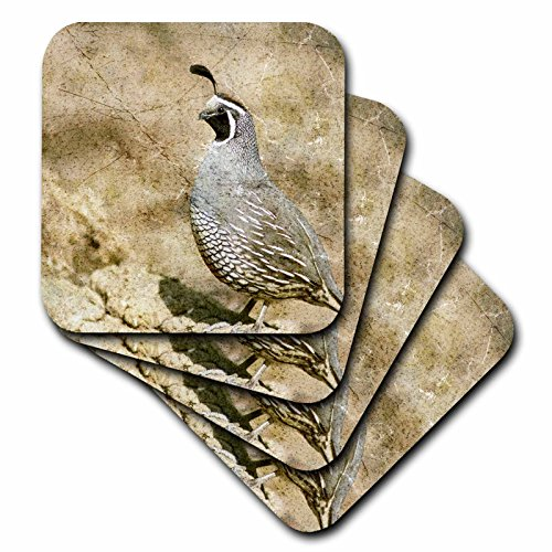 (3dRose Cassie Peters Birds - California Quail With Textures - set of 8 Coasters - Soft)