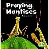 Praying Mantises (Little Critters)