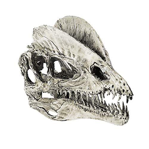 - Blesiya 1/3 Scale Dinosaur Skull Dilophosaurus Skeleton Model Drawing Prop White