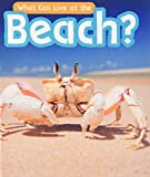 What Can Live at the Beach? (Read and Learn: What Can Live There?)