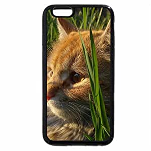 iPhone 6S / iPhone 6 Case (Black) Red cat lying on the grass