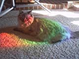 Rob's Super Happy Fun Store Rainbow Diffraction