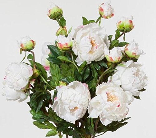 Peony-Open-Champagne-30-Inches-High-Set-of-12-Sprays