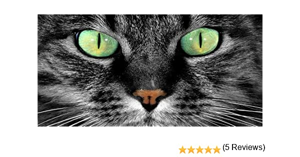 Green Cat Eyes Photo License Plate Free Personalization on This Plate