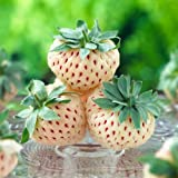 White Soul Alpine Strawberry 30 Seeds - Fragaria