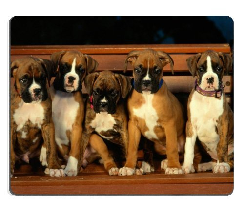 Boxers Puppies (Boxer Puppies Dogs Pets Animals Mouse Pads Customized Made to Order Support Ready 9 7/8 Inch (250mm) X 7 7/8 Inch (200mm) X 1/16 Inch (2mm) High Quality Eco Friendly Cloth with Neoprene Rubber Luxlady Mouse Pad Desktop Mousepad Laptop Mousepads Comfortable Computer Mouse Mat Cute Gaming Mouse pad)