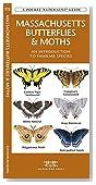 Massachusetts Butterflies &  Moths: A Folding Pocket Guide to Familiar Species (A Pocket Naturalist Guide)