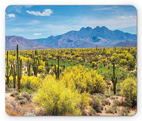 (Saguaro Mouse Pad, Blooming Palo Verdes and Saguaros at Four Peaks Hills Phoenix Arizona, Standard Size Rectangle Non-Slip Rubber Mousepad, Apple Green Pale Blue,8.66 x 7.08 x 0.118 Inches)