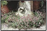 Sweet Alyssum Cat Doormat Sueellen Ross Fiddler's Elbow