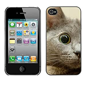 YiPhone /// Prima de resorte delgada de la cubierta del caso de Shell Armor - Nebelung Kitten Eye Cat Russian Blue - Apple iPhone 4 / 4S