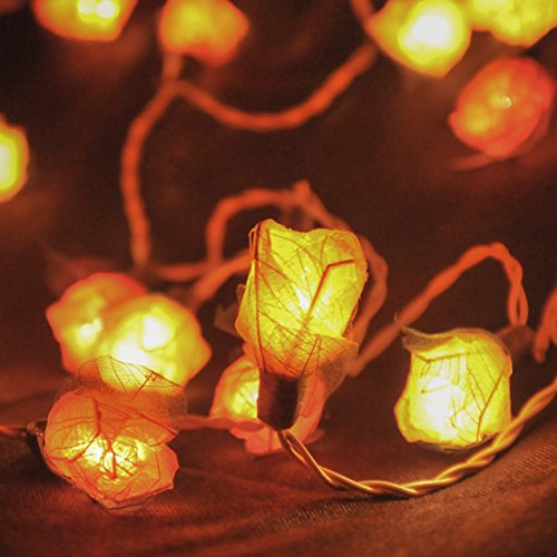 [String Lights 35 Rose Flower Lamp Fairy Light for Wedding Garden Party Halloween Christmas, Indoor] (Fairly Odd Parents Halloween Costume)