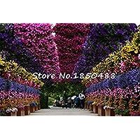 Zoomy Far Semillas 10pc / Lot de Semillas de Flores de peonía 49%