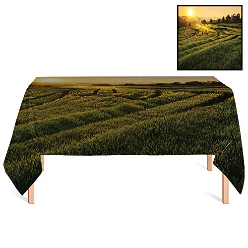SATVSHOP Heavy Weight Cotton Canvas /55x55 Square,Farm House Barley Field Sunset at Samoeng Chiang Mai Thailand Asian Nature Countryside Green Yellow.for Wedding/Banquet/Restaurant.