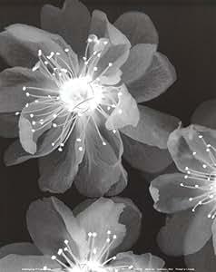 Luminous (Mini) Art Print Poster by Dellinger Gil, 8 X 10-Inch