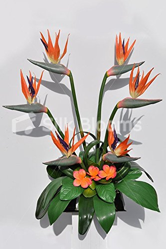 Bird Of Paradise Display - In Bloom Orange Birds of Paradise Orchid Table Flower Display