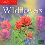 Audubon Wildflowers Wall Calendar 2016