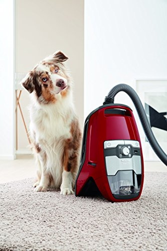 -[ Miele Blizzard CX1 Cat and Dog Powerline Vacuum Cleaner, 2 Litre, 890 W  ]-