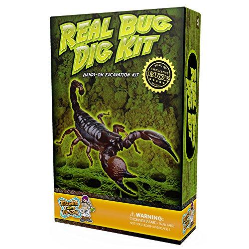 Discover with Dr. Cool Véritable insectes Excavation kit–DIG, découverte, et Collectionne 3Véritables insectes.